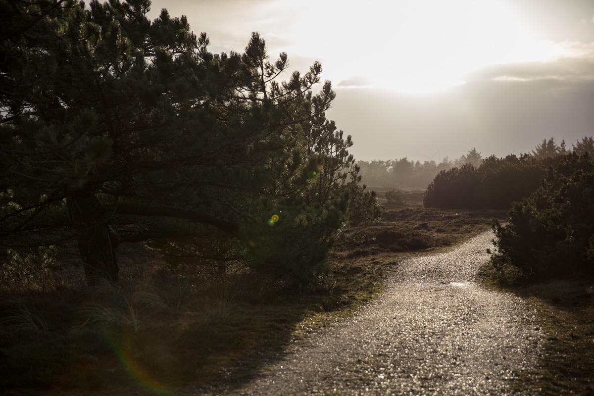 PLACES - Ringkøbing Fjord II